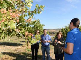 La Junta destina a la comarca de Los Montes más de 22 millones en apoyo a su sector agrario